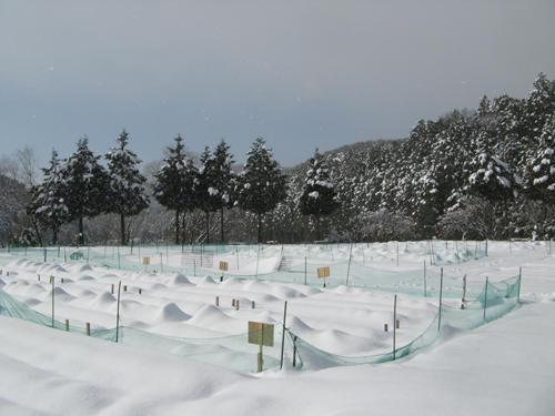 iwakura5.jpg